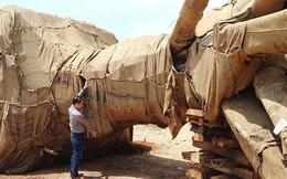Để lọt xe chở cây 'kỳ quái' do CSGT tham gia 'Đại hội...'