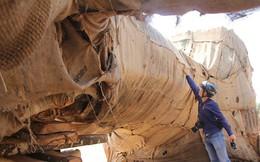 Công an vào cuộc vụ 3 cây khủng bị CSGT bắt giữ: 1 cây không đúng thực tế