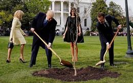 Lý do cây sồi do Tổng thống Mỹ và Pháp trồng tại Nhà Trắng biến mất 'bí ẩn'