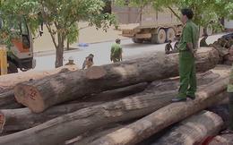 """Cục kiểm lâm nói về trùm gỗ lậu Phượng """"râu"""""""
