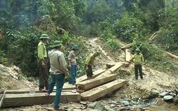 Vụ phá rừng lớn nhất Quảng Bình: Kỷ luật 5 cán bộ kiểm lâm