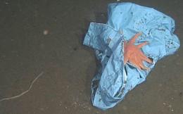 Tìm thấy túi rác nhựa sâu 10.000m dưới đáy biển - kỷ lục vứt rác của loài người là đây