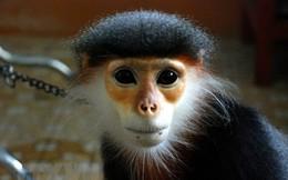 Cất giữ động vật quý hiếm, một người bị phạt hơn 350 triệu đồng