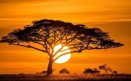 Ai cũng thấy Mặt trời trông to hơn hẳn mỗi khi hoàng hôn, bình minh - nhưng vì sao thì đố bạn biết!