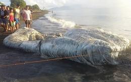 Sinh vật lông lá như đến từ ngoài hành tinh bất ngờ dạt vào bở biển Philippines