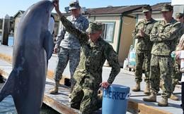"""Cá heo quân sự: Chiến binh tinh nhuệ không dễ thuần phục, sẵn sàng tuyệt thực """"chống lệnh"""""""