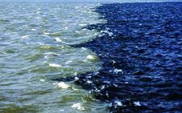 Người ta vừa phát hiện một vùng nước chết rộng hàng ngàn kilomet ở biển Ả Rập