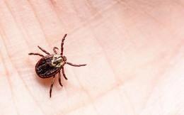 Chuyên gia cảnh báo sự bùng nổ của một loài bọ gây bệnh nguy hại cho trẻ trong mùa hè