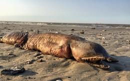 Đây là con cá mập với đầu rắn và 300 chiếc răng sắc nhọn mà bạn chỉ có thể gặp trong ác mộng