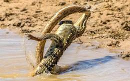 7 ngày qua ảnh: Cá sấu đánh bại rắn khổng lồ trong cuộc thủy chiến