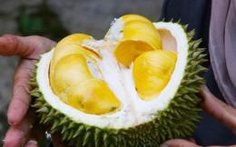 Ra chợ mua sầu riêng, nhớ đừng bỏ qua những đặc điểm này để mua được quả sầu riêng ngon