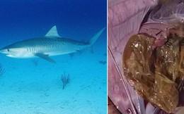 Ai chưa tin vào hậu quả của rác nhựa dưới đại dương thì hãy xem ngay video này
