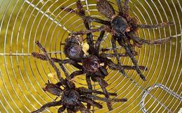 Rết rán Thanh Đảo, mọt cọ Châu Phi hay nhện chiên Campuchia - những món ăn nhìn thì phát sợ nhưng vẫn thành đặc sản của nhiều địa phương