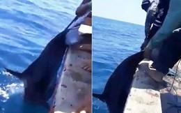 Phẫn nộ cảnh ngư dân phóng lao giết hại cá heo dã man