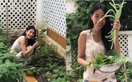 Tự hái rau trong vườn để nấu ăn, Thủy Tiên giản dị thế này ngoài đời thực