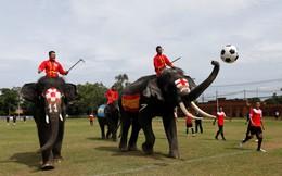 24h qua ảnh: Voi chơi bóng đá trong chiến dịch chống đánh bạc ở Thái Lan
