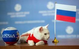 Mèo tiên tri Achilles dự đoán đúng Nga thắng trận khai mạc World Cup