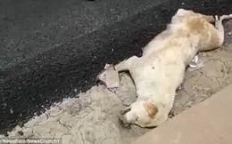 Dư luận Ấn Độ phẫn nộ vì nhóm công nhân thản nhiên rải nhựa đường lên một chú chó đang nằm ngủ