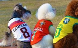 """""""Sốt xình xịch"""" trào lưu mặc trang phục World Cup cho cún cưng"""