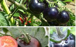 Những trái cây lạ xuất hiện trên thị trường Việt