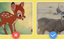 Câu hỏi đau đầu nhất trong ngày: Hươu với nai khác nhau chỗ nào? Hóa ra tất cả chúng ta đã nhầm về nai Bambi