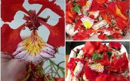 """Cô gái khoe món """"ăn cả tuổi thơ, gói cả mùa hè"""" với hoa phượng khiến hội mê ẩm thực tròn mắt ngạc nhiên"""