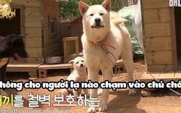 Câu chuyện kỳ diệu về 2 chú chó nhận nuôi một bé cún con bị thương đi lạc, chăm sóc tận tình như con đẻ