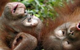 Bạn có tin rằng động vật cũng biết phép lịch sự không? Hóa ra có hẳn một quy tắc riêng đấy!