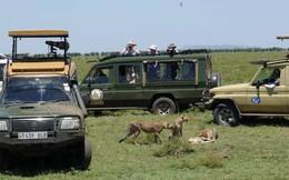 Tưởng là tốt, nhưng các chuyến du lịch hoang dã đang gây hậu quả hết sức nghiêm trọng