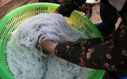 """Cá ngần sông Đà giá 300.000 đồng/kg gây """"sốt"""" thị trường"""