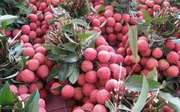 Hơn 99% vải thiều xuất khẩu của Bắc Giang sang thị trường Trung Quốc