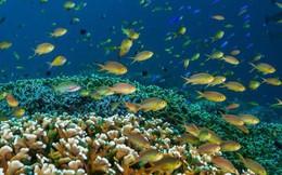 Khám phá rạn san hô thiên đường của Philippines - vẫn vẹn nguyên dù thế giới đã lâm nguy