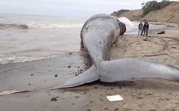 Cá voi dạt lên bờ biển Thái Lan chết vì nuốt phải nhiều túi nylon