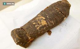 """Chụp cắt lớp xác ướp """"chim ưng"""" Ai Cập bỗng nhiên phát hiện bất ngờ lớn"""