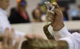 Trúng độc rắn trong tình huống không thể tin nổi