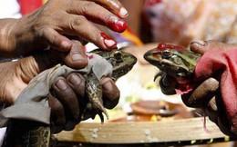 Đám cưới ếch ở Ấn Độ
