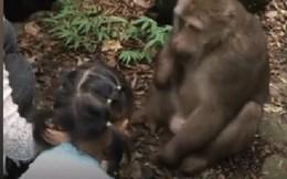 Cùng mẹ cho khỉ ăn ở vườn thú, bé gái bất ngờ bị con vật đấm vào mặt