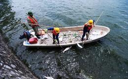 Giải pháp nào khắc phục hiện tượng cá chết ở Hồ Tây?
