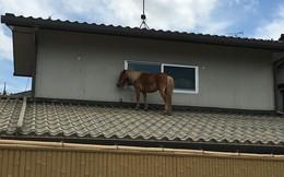 24h qua ảnh: Ngựa mắc kẹt trên mái nhà sau đợt lũ lụt kinh hoàng ở Nhật Bản