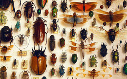"""Hơn 1 triệu loài côn trùng trên Trái đất nhưng đây là lý do mà đa phần chúng """"sợ"""" sống dưới biển hơn bao giờ hết"""