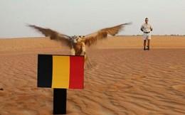 'Thần' cắt dự báo sốc cho tuyển Anh trước cuộc chiến với Bỉ