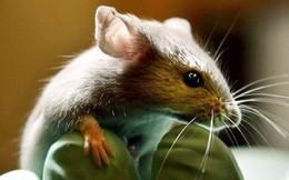 Trí tuệ nhân tạo đã tiến bộ đến mức thay thế được thí nghiệm dùng động vật sống