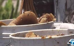 Người giúp việc xui xẻo, bị 80 nghìn con ong tấn công, đốt kín từ đầu đến chân