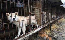 """Cộng đồng thích ăn thịt chó Hàn Quốc phản đối phán quyết """"cấm làm thịt"""" của tòa án và tuyên bố sẽ kiện tới cùng"""
