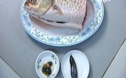 Mật cá trắm - không phải là thần dược
