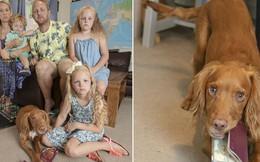 Góc đen đủi: Gia đình 5 người bị chó cưng cắn nát 2 quyển hộ chiếu ngay trước ngày đi nghỉ dưỡng xa xỉ