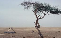 Những cái cây cô độc nhất hành tinh: Vẻ đẹp của sự lẻ loi khiến chúng trở nên nổi tiếng