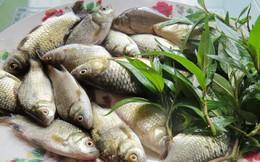 4 món ăn từ cá cải thiện ham muốn cho quý ông