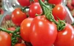 Trái mùa, cà chua bi đắt gấp ba ngày thường tại Hà Nội