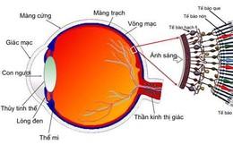 Tim mạch - Nội tiết - Máu - Những bệnh lý liên quan đến mắt không thể chủ quan